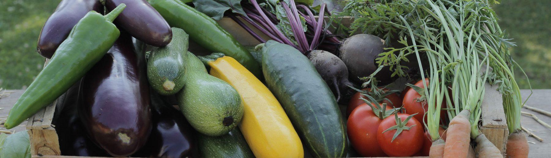 Permaraicher : maraicher en permaculture